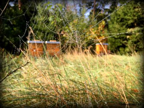 Unser Waldstandort mit Blick auf die Dadantbeuten