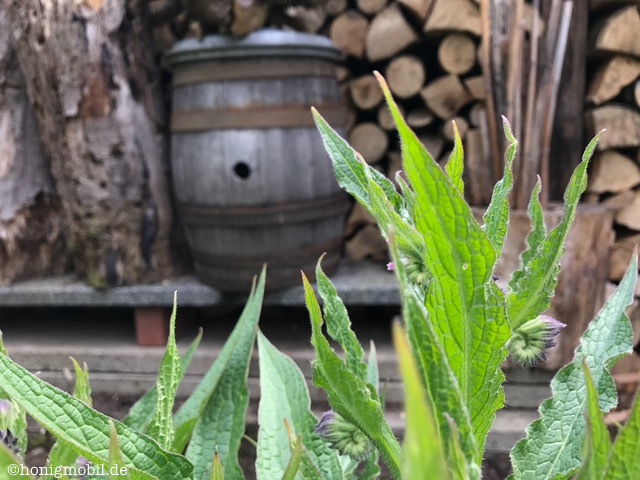 Südhessen: die Hummel im Äbbelwoifass